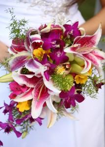 cascade: stargazers, cymbidium & dendrobium orchids
